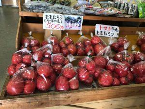 大宜味村のトマト