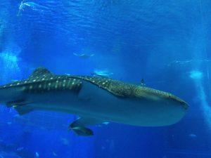 美ら海水族館には行かない方が良い