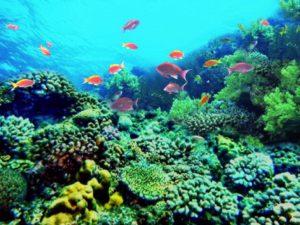 沖縄の海がきれいな理由はプランクトンとサンゴ礁